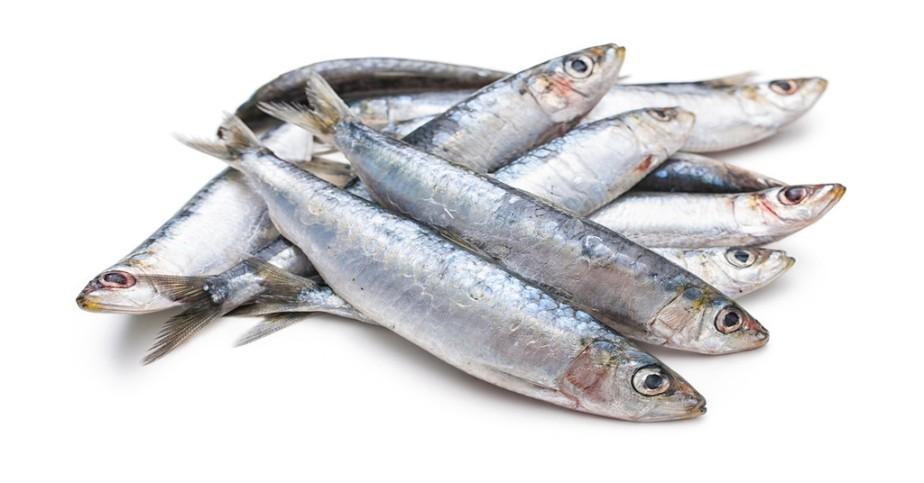 fish_1024x1024