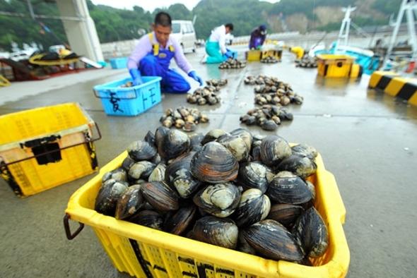 nov 6 2016 iwaki clams.jpg