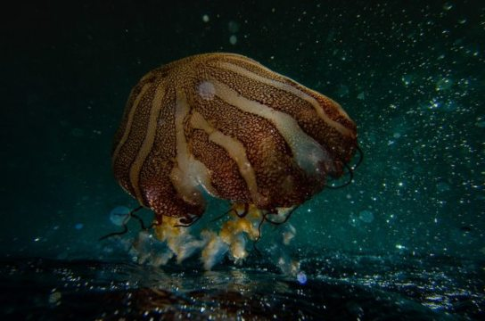 animal-aquatic-close-up-1298683.jpg